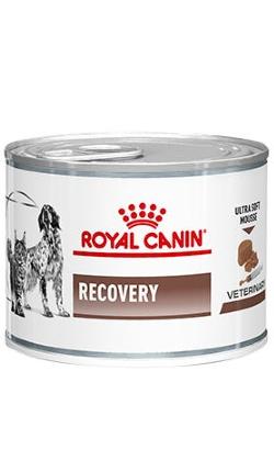 Royal Canin Recovery Canine & Feline | Wet (Lata)